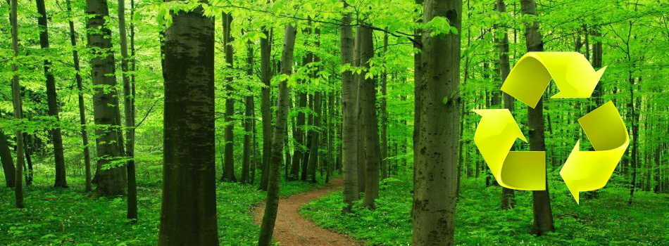 Very-Green-Forest-recycle